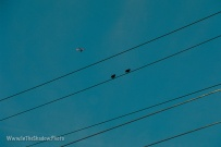 Birds On Wire_low_res